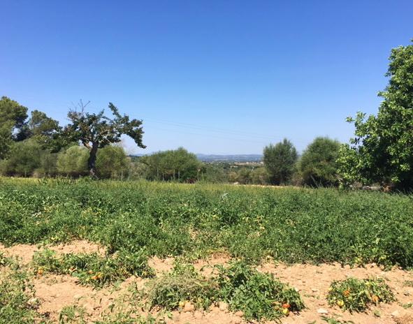 Anwesen auf Mallorca zu Verkaufen